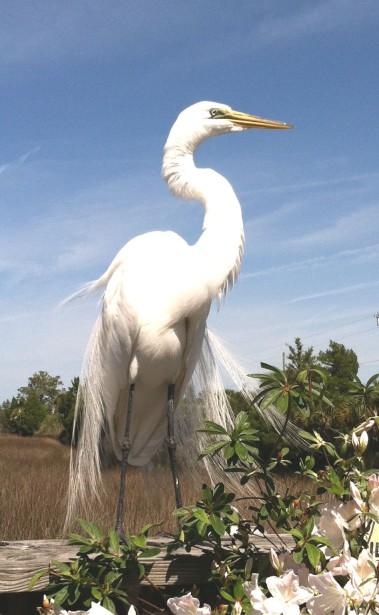 whitebird 3